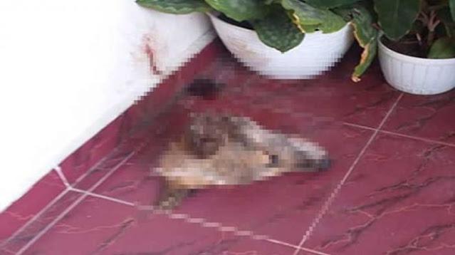 Akhirnya Peneror Kepala Anjing di Rumah Pejabat Kejati Riau Ditangkap