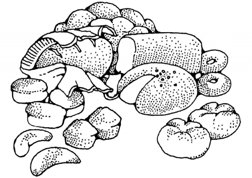 Image Result Forin Coloring Page