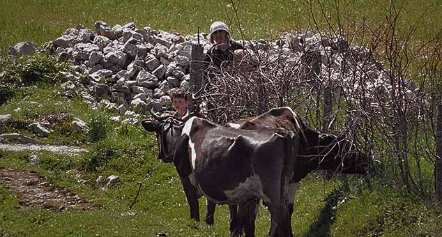 #Napad Šiptari #Albanci #Srbi #Kosovo #Metohija