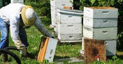 Μέθοδος τροφαποθήκης στη μελισσοκομία