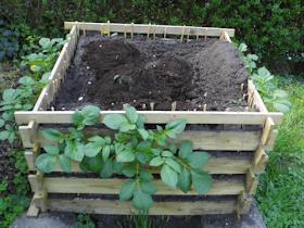 Kartoffeln Im Garten Anbauen