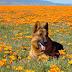 Τι ηρεμεί ένα υπερκινητικό σκύλο;...