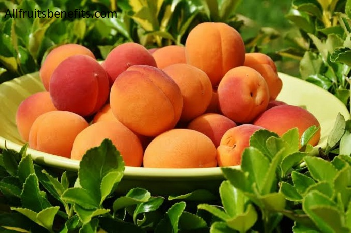 benefits of dry apricot during pregnancy,benefits of apricots for skin,apricot leaves benefits,nutritional value in apricots,turkish apricots health benefits,dried apricot nutrition facts and benefits,health benefits of eating apricots,apricot benefits for weight loss,benefits of sun dried apricots,sun dried apricots health benefits,health benefits of eating dried apricots,organic dried apricots benefits,benefit of eating apricots dried,benefits of dried apricots for weight loss,the benefits of apricots,apricot nutrition facts and benefits,apricot extract skin benefits,apricot extract benefits,nutritional value of apricot fruit,dry apricot benefits in urdu,dried turkish apricots benefits,eating dried apricots everyday,health benefits of fresh apricots,soft apricots health benefits,dried turkish apricots nutrition,organic dried apricots health benefits,unsulphured apricots health benefits,apricot leaves health benefits,the benefits of dried apricots,dried apricots bad for you