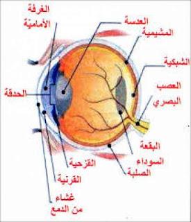 كيف يؤثر السكري على العين و ما علاقته بفقدان البصر؟