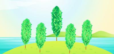 poplar-tree-uses