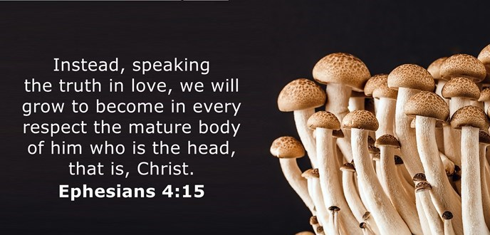 Speaking the truth in love, we will in all things grow up into him who is the Head, that is, Christ.