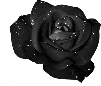 https://1.bp.blogspot.com/-qT_3y9JJI_w/X_V6d8rPS1I/AAAAAAAAjt8/dDs51JrSciwNodyotL5quoSUkB65MrK3gCLcBGAsYHQ/w400-h344/Colorful_Roses_Nae_Black.png