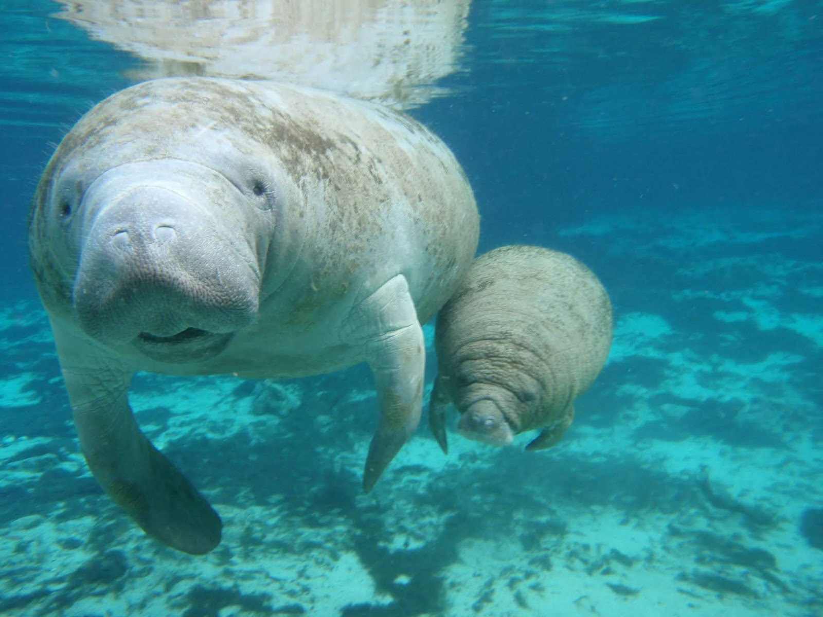 Baby Dugong Cute Pictures