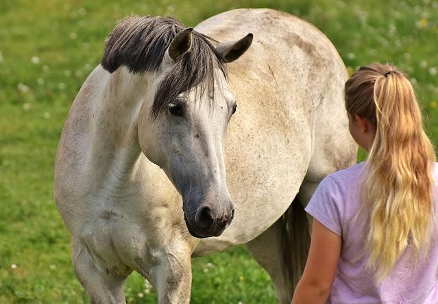 comment-approcher-un-cheval