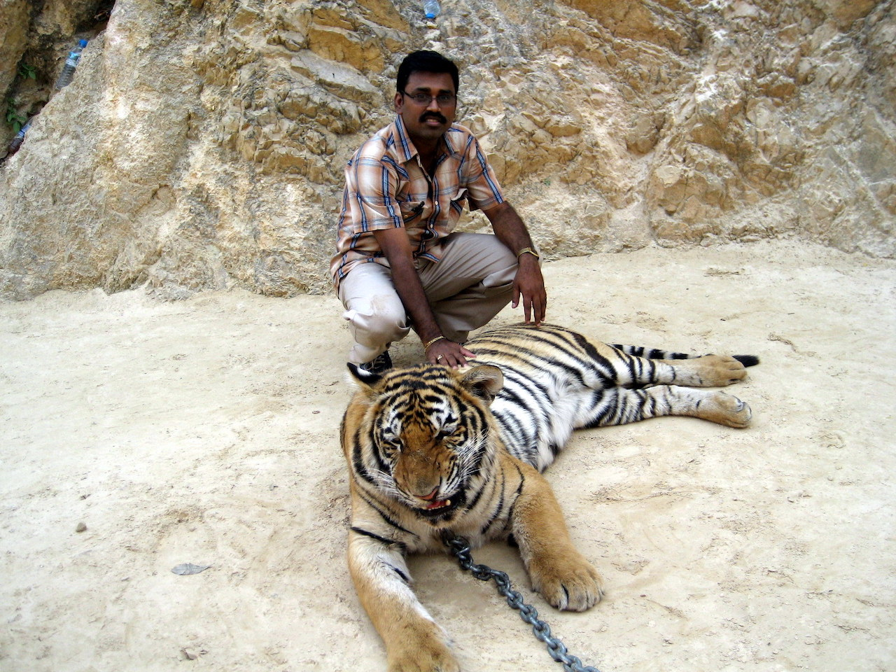 Posing with the Tiger in Tiger Temple of Thailand
