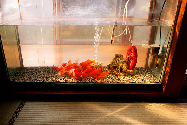 Acrylic Aquariums – How They Came to Be