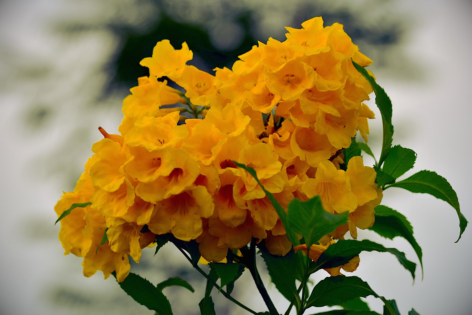 Flower Gardening Ideas