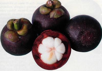 Mangostana indica
