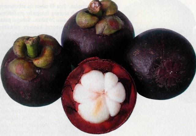 Prospek Bisnis Budidaya Manggis Mini
