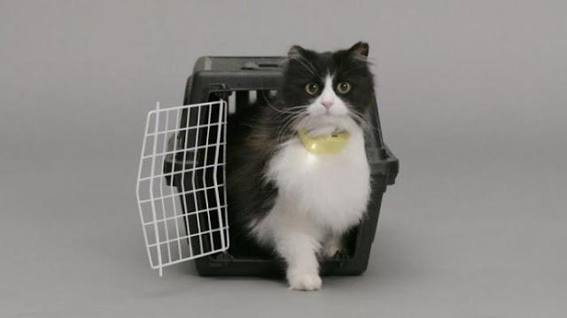Tata Cara & Doa Mengubur Mayat Kucing sesuai Tuntunan Rasulullah SAW, Termasuk Kucing Kelindas Mobil