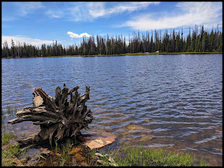 Cool Root System on Dead Tree on Crystal Lake