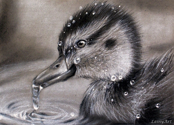 02-Baby-Duckling-Alaina-Ferguson-Lainy-Animal-Charcoal-Portrait-Drawings-www-designstack-co