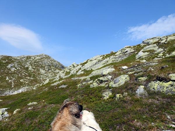 norefjell gråfjell