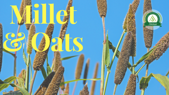 Millet Vs Oats - Which is more beneficial to help you in losing weight?