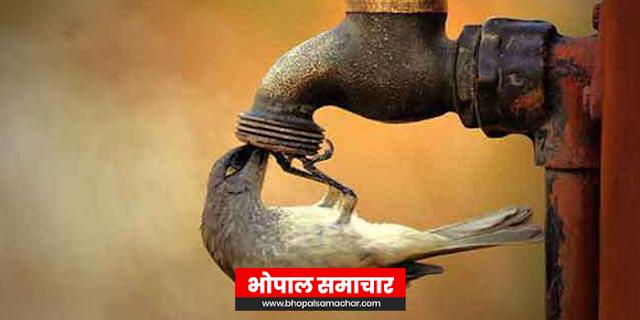 तंदूर की तरह तप रहे हैं मप्र के 9 शहर, लोगों की स्किन जल गईं, प्यासे पंक्षियों की मौत | MP WEATHER REPORT