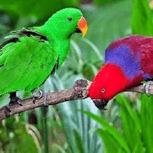 Jenis Jenis Dan Harga Burung Nuri