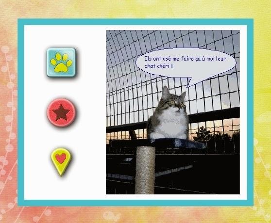 Les chats du bocage installer une cl ture pour chat - Cloture anti fugue chat ...