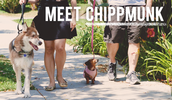 Meet the Chippmunk team!