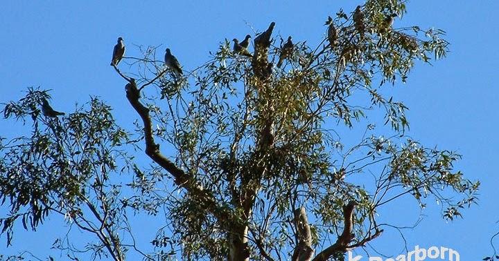 AnimalBytes: Great Backyard Bird Count - Go Out & Count Birds!