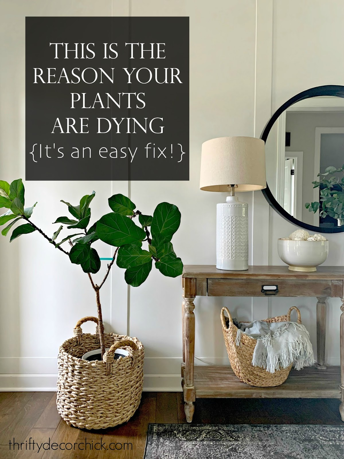 reason your houseplants are dying