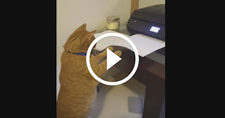 Ginger Kitty Extremely Fascinated by Home Printer