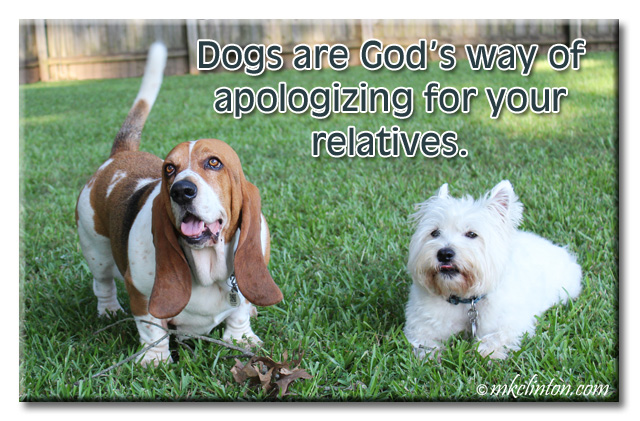 Dogs are God's way of apologizing for your family. meme