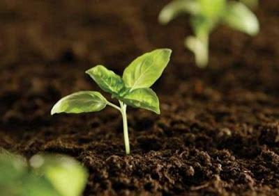 Cây mầm xanh mang sức khỏe cho mọi gia đình