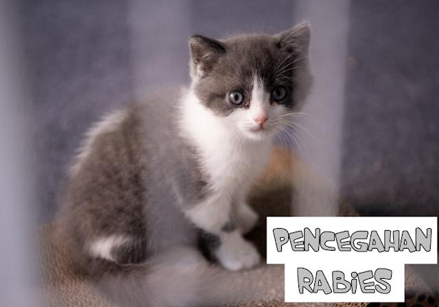 Obat Rabies Kucing