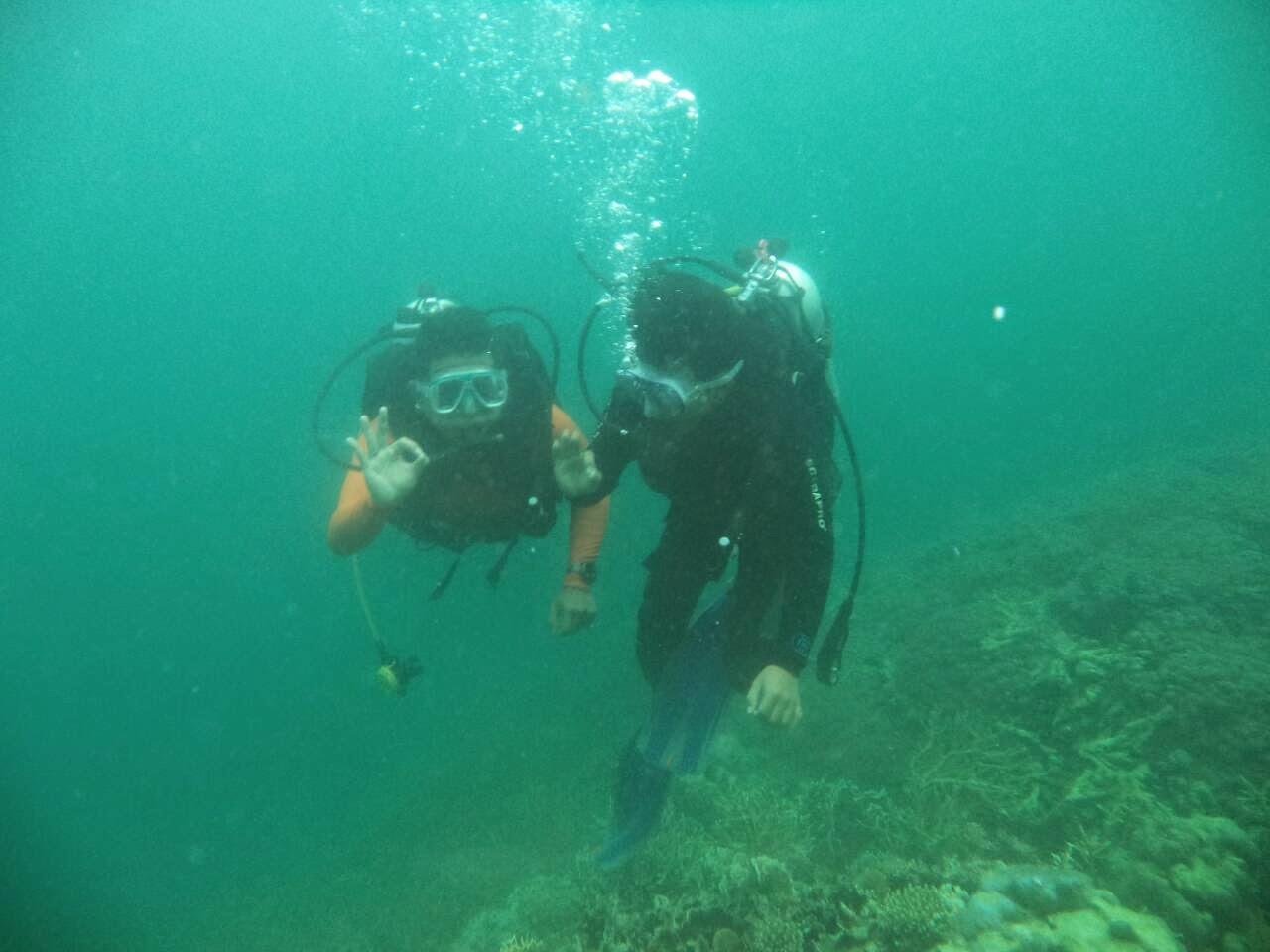 diving di pulau senja kendari
