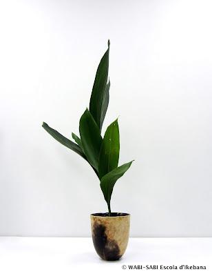 Ikebana-shoka-shofutai-wabisabi-escola