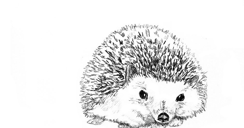 A Day In The Life Of A Zookeeper Hedgehog Inspired Art