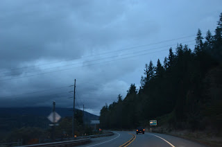 pacific northwest hill and road pine trees