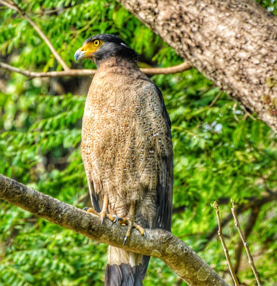 Tips for Forest Birds Photography   Camera Settings   Bird Photography