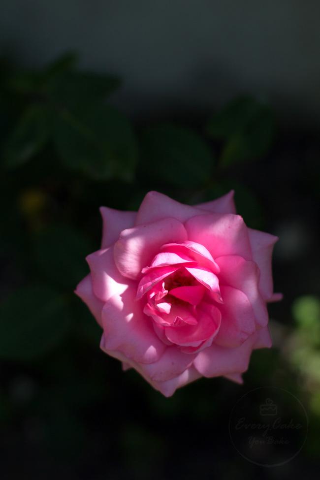 ucierana konfitura z płatków róży