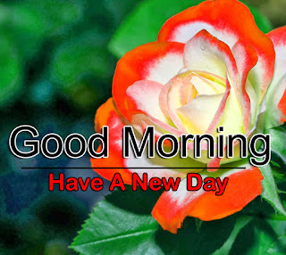 New Good Morning 4k Full HD Images Download For Daily%2B102