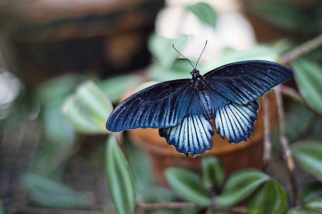 Gambar kupu kupu dan bunga yang indah
