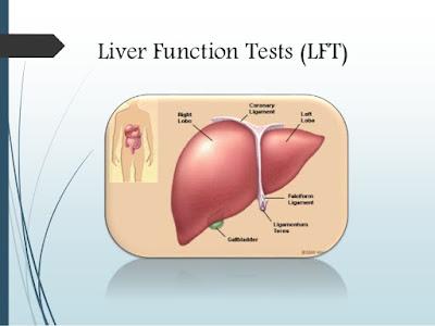 liver-function-test