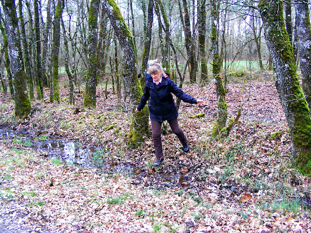 Crossing a waterlogged section of forest.  Indre et Loire, France. Photographed by Susan Walter. Tour the Loire Valley with a classic car and a private guide.