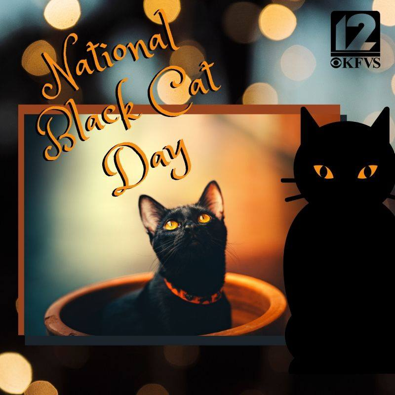 National Black Cat Day Wishes Images