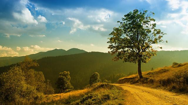 Paisagem Natural Caminho da Natureza para PC, Notebook, iPhone, Android e Tablet.