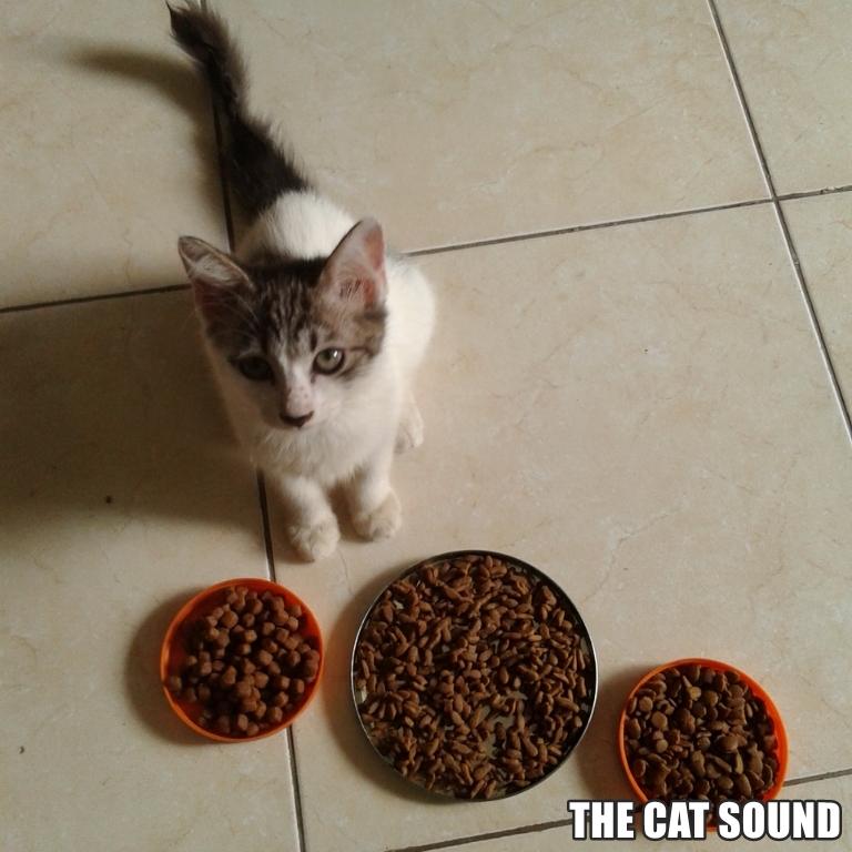 Review Optima Cat Food