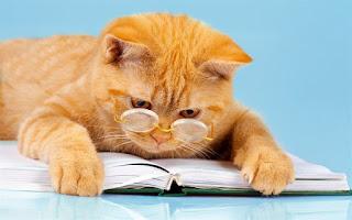 معلومات مهمه حول ذكاء قطتك