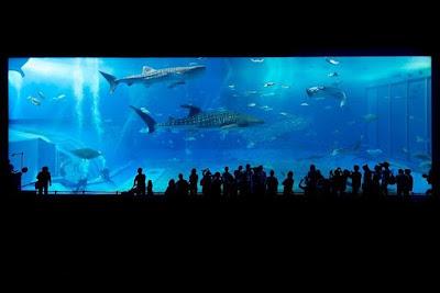 World Largest Aquarium: Georgia Aquarium