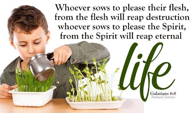 Eternal Life | Galatians Bible Quotes | Sows