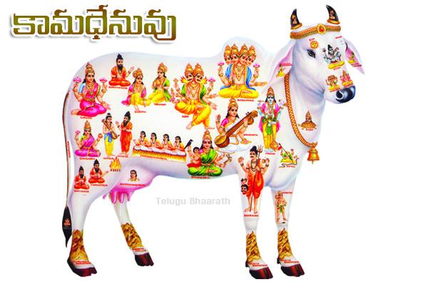 కామధేనువు , kamadenuvu